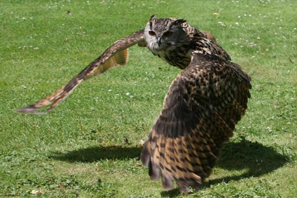 Birds-of-Prey-cr-RHS-wois