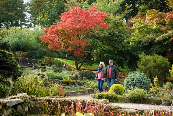 RHS-Garden-Wisley-October-2018-Free-Day-1-cr-RHS-Georgi-Mabee-wois