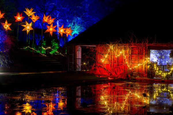 Christmas-Glow-cr-RHS-Paul-Debois-wois