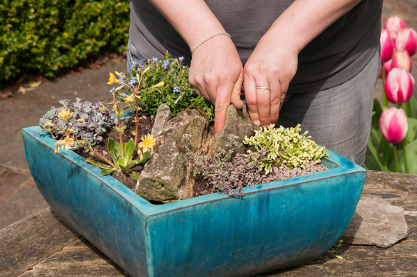 RHS-Garden-Wisley-March-events-2019-World-of-Alpines-cr-RHS-Tim-Sandall-wois