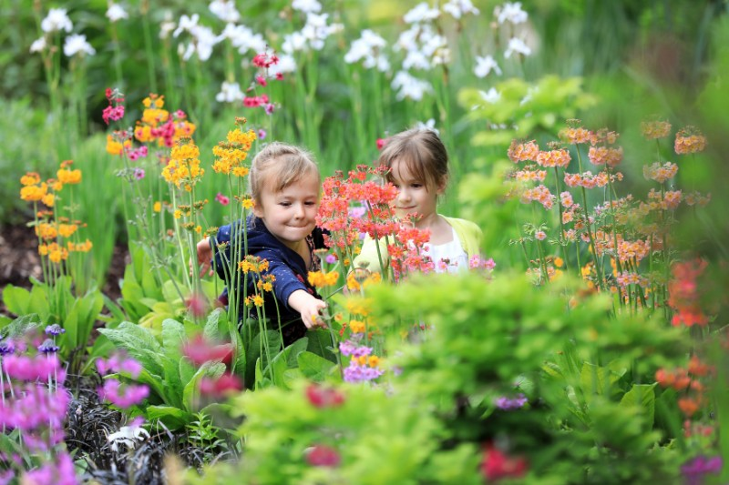 Press-Family-Gardening-Festival-RHS-Garden-Wisley-30th-May-2018