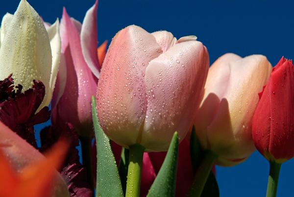 RHS-Garden-Wisley-May-Early-photo-am-cr-RHS-Tim-Sandall-wois
